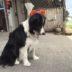 大匠建設のマスコット犬≪くぅ≫